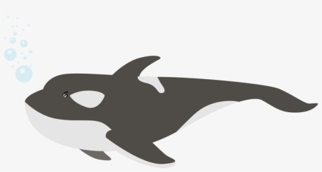 Beluga Whale Png Image Transparent Whales Transparent PNG 1756x1001 Free Download on NicePNG