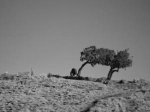 Gich (Semēn, Ethiopie), mars 2007. Cliché Guillaume Blanc