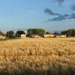 Central Experimental Farm, Ottawa, Baseline Road - P Anderson - August 2013