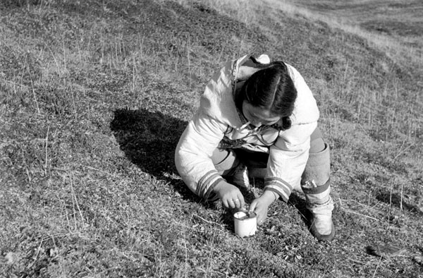 2. Inuk woman is picking blueberries on a hill near the campsite [using cup]. 26-9-53 NWT Archives/Douglas Wilkinson fonds/N-1979-051: 0174
