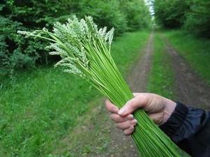 asparagus-wild