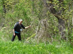 Cate Sandilands, nous instruisant sur les conséquences de la présence envahissante du cynanche (dog strangler vine), dans le Rouge Park.