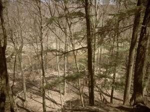 Bronte Creek Ravine