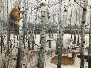 6 - Beaver and Deer