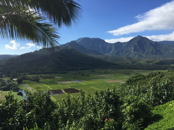 Irrigated taro fields, Hanalei