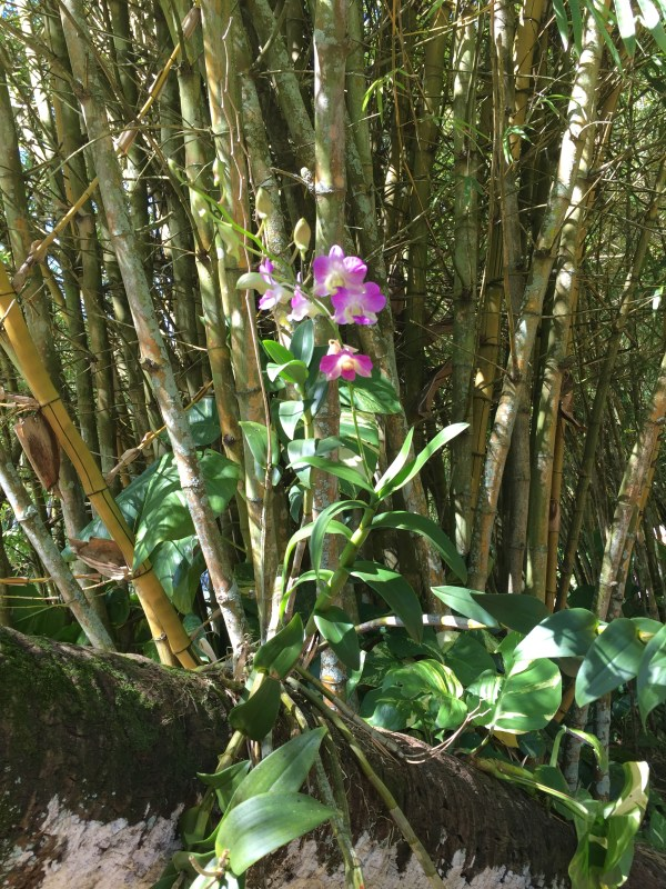 Orchid and Bamboo at Allerton Garden