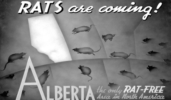 """Rats are coming,"" Provincial Archives of Alberta. Distributed by Field Corps Branch, Department of Agriculture, Government of Alberta, c. 1950."