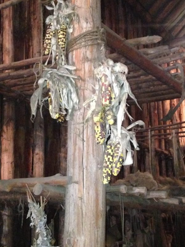 Maize in Longhouse
