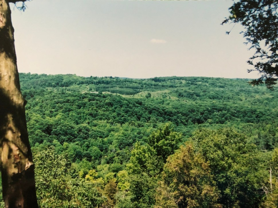 A view of the Southern Ontario forest from the Bruce Trail.