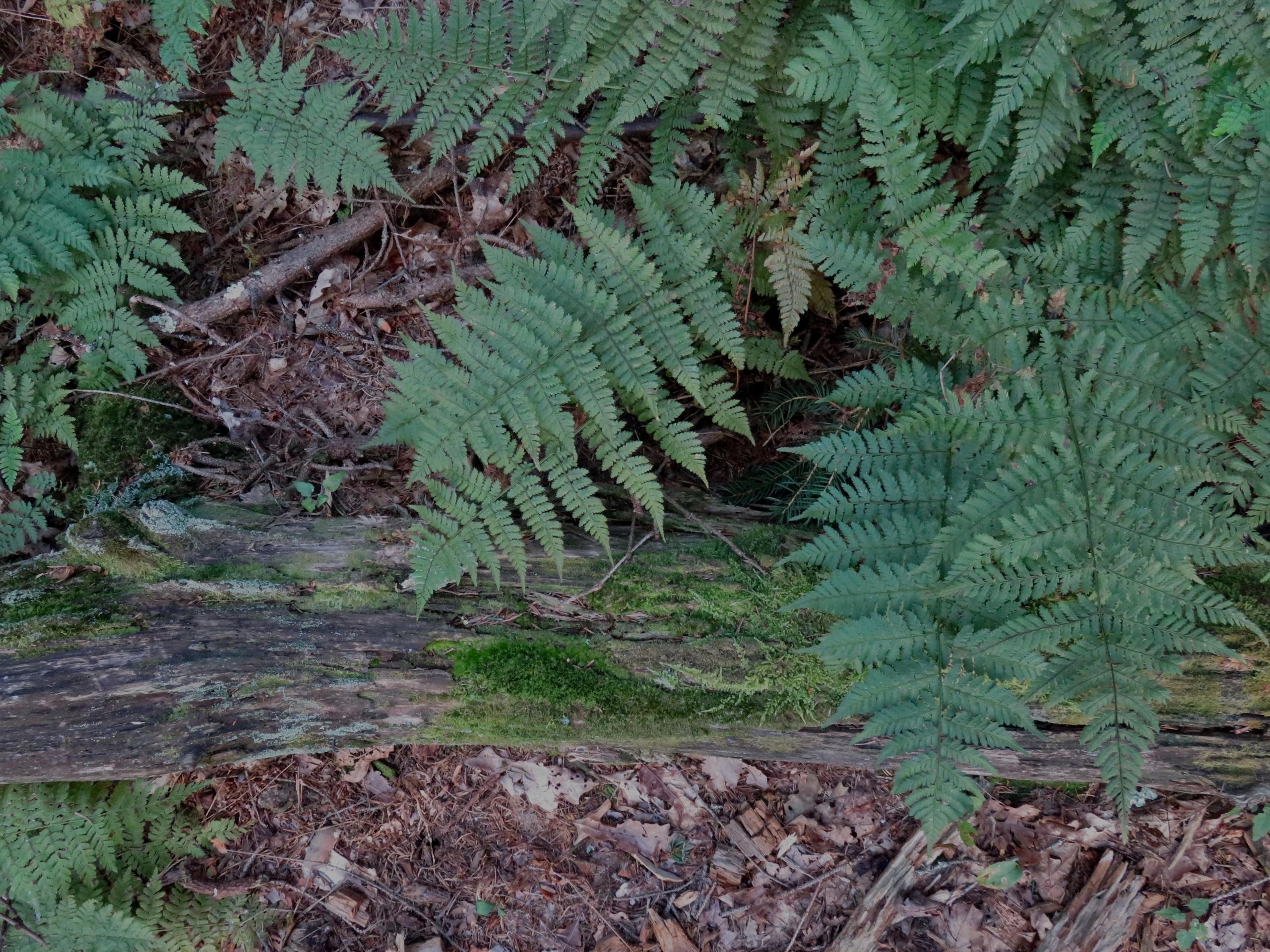 Pachaug Forest Floor