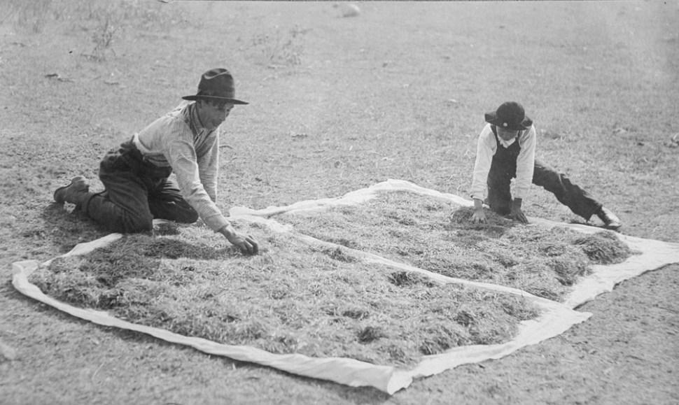 two Michi Saagiig Nishnaabeg men drying wild rice
