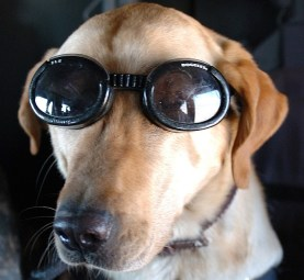 dog-854385_640