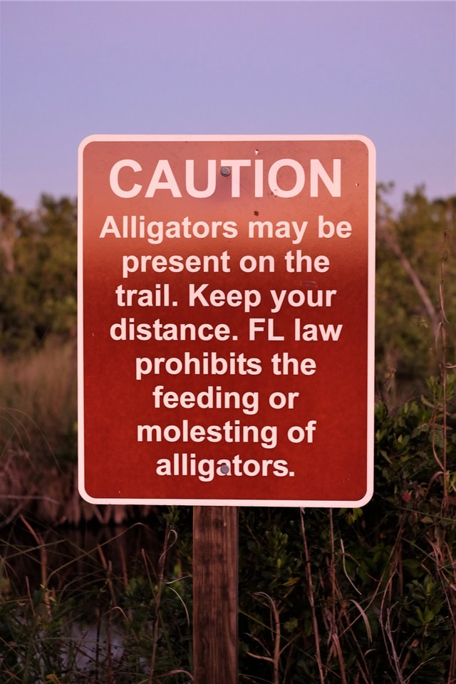 Caution sign warns not to feed or molest alligators