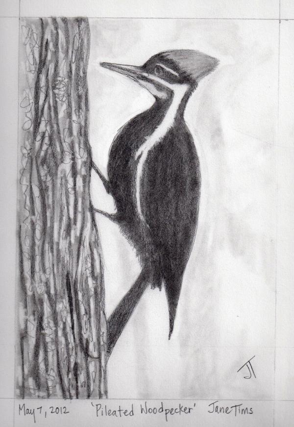 Pencil Drawings Animals Nichepoetryandprose