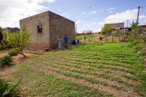 Food security ensured in the low-cost, RDP-type (Reconstruction and Development) sector of Suurbraak