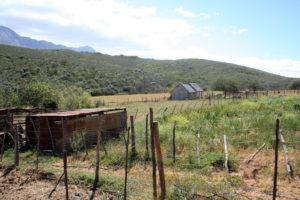 Simon Airies' farm