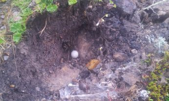 I lifted this stone and found a scorpion trapped in a spider's web. Not the best picture admittedly.