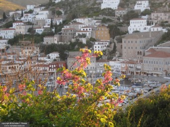 Flowers on the island of Hydra, Greece