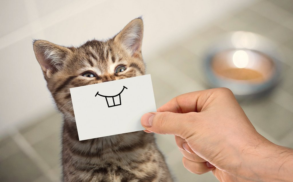 Funny cat - similes and metaphors | From the blog of Nicholas C. Rossis, author of science fiction, the Pearseus epic fantasy series and children's book