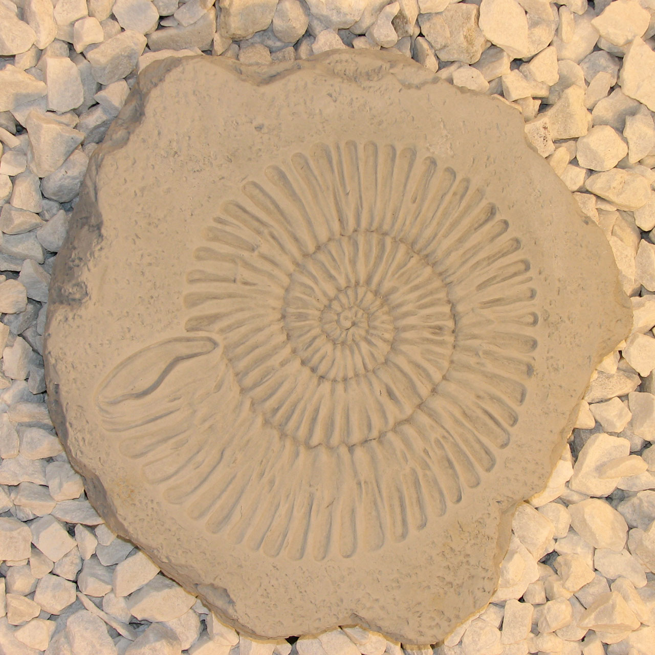 Ammonite Stepstone