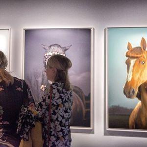 #stockholm #fotografiska #horses