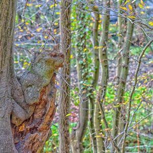 Biber im Baum #Siebenmühlental #Wanderung #Impressionen