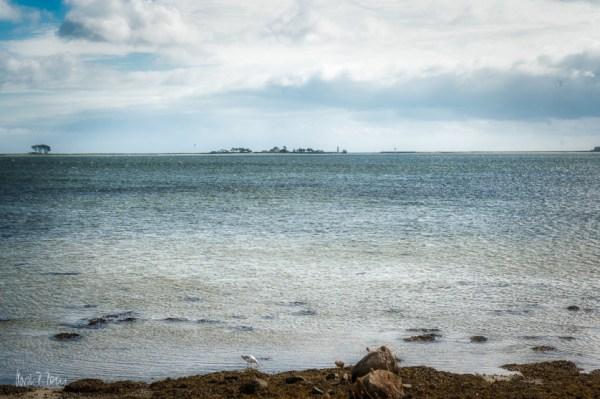 Lotseninsel