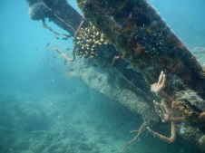 One of the wrecks