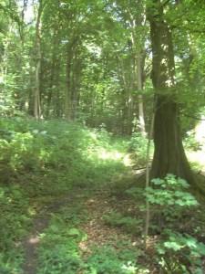 2008-07-05-wiehengebirge-007