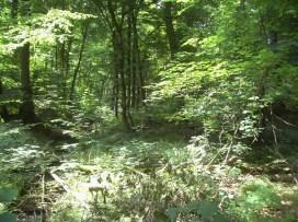 2008-07-05-wiehengebirge-009