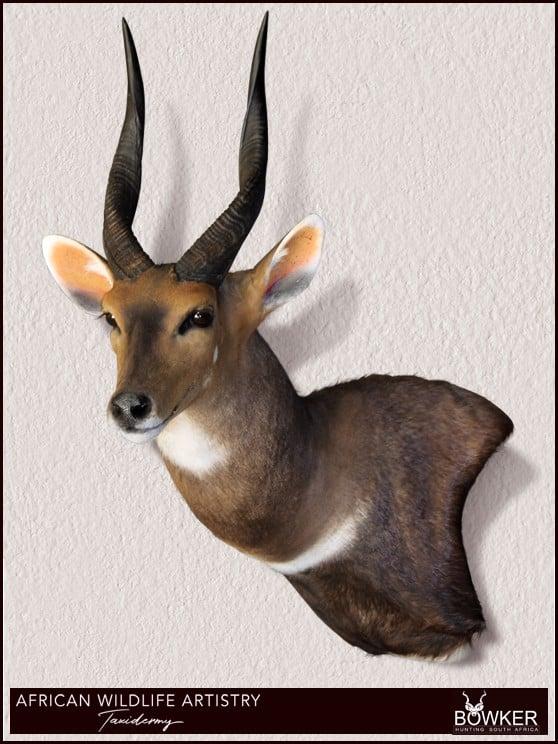 Bushbuck wall pedestal mount