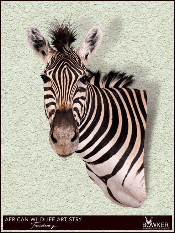 Zebra wall pedestal mount