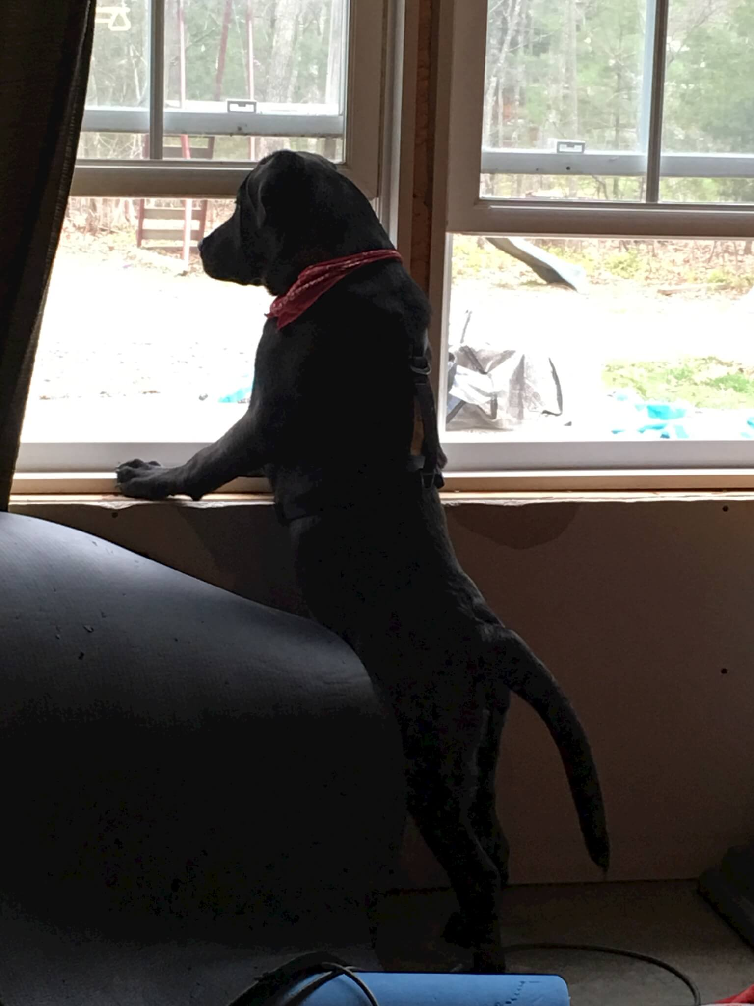 link standing in front of the window before we added the shiplap