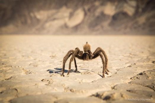 742_Death Valley_131110