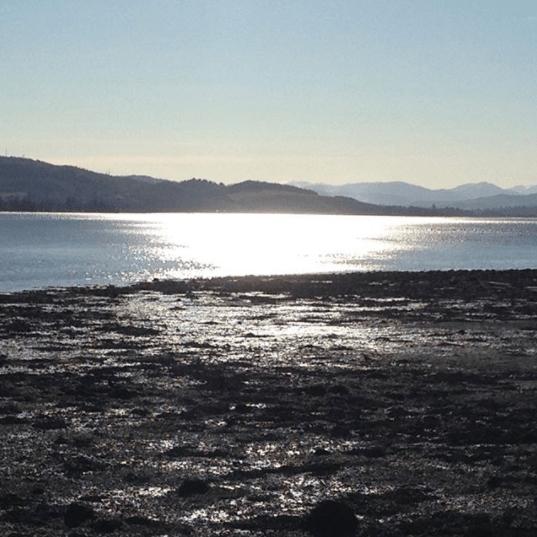 Nicki MacRae Art - View from the Cromarty Firth Bridge