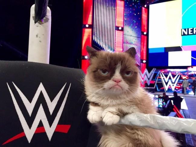 Photos of Grumpy Cat's WWE Raw Visit