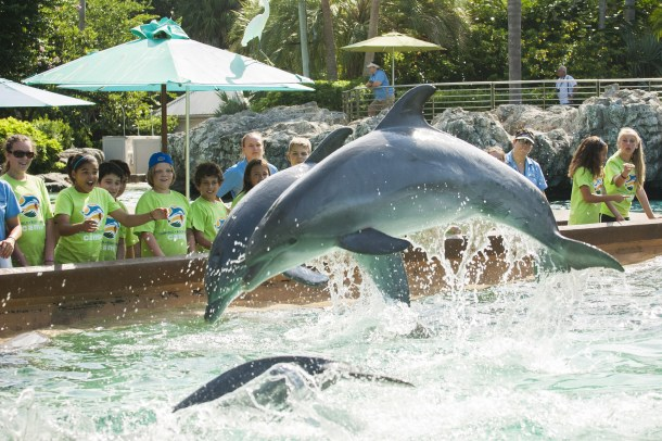 Campers_watching_dolphins_jump