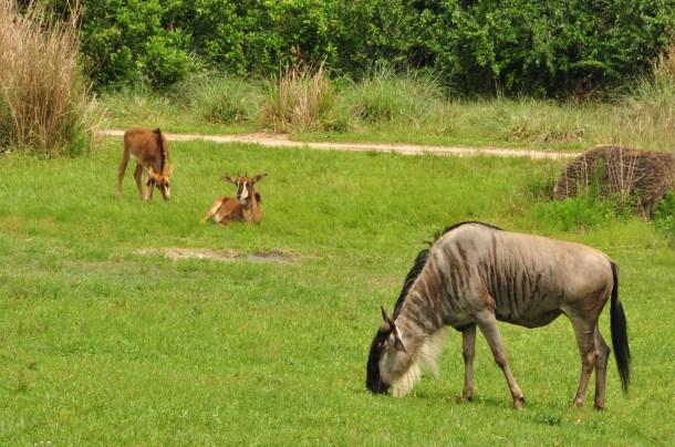 Wild Africa Trek 120