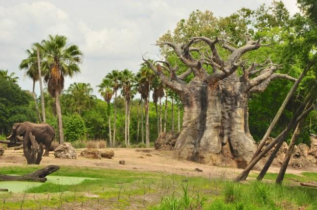 Wild Africa Trek 125