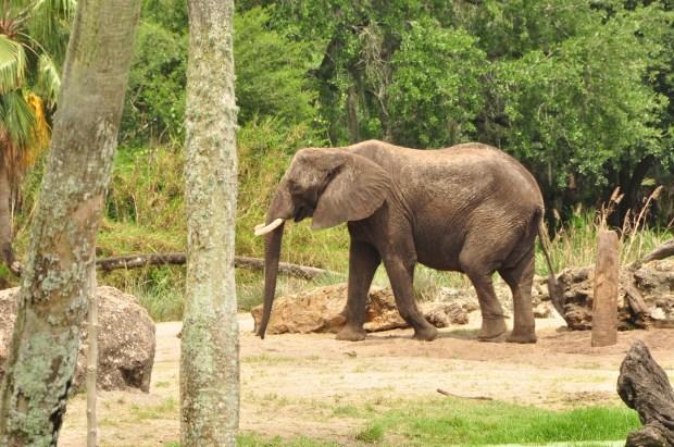 Wild Africa Trek 126