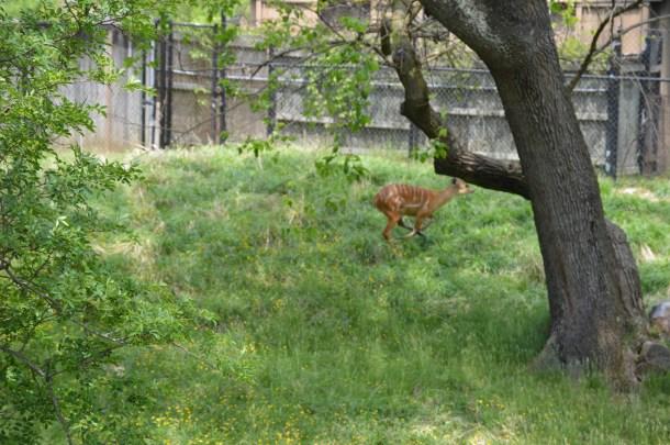 Maryland Zoo (22)