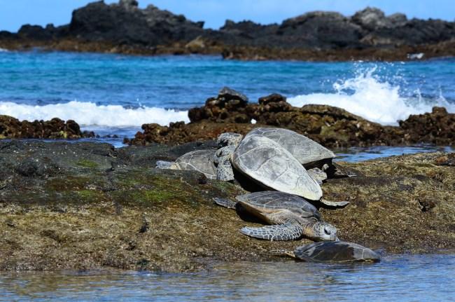Hipmunk Hotels: Island Hopping in Hawaii