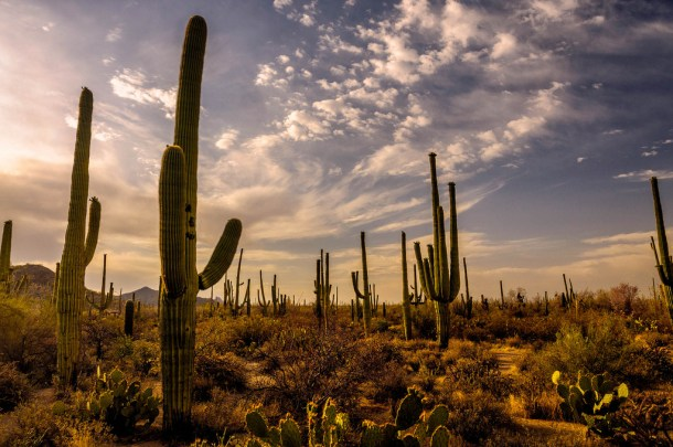 A Visitor's Guide to Outdoor Fun in Tucson