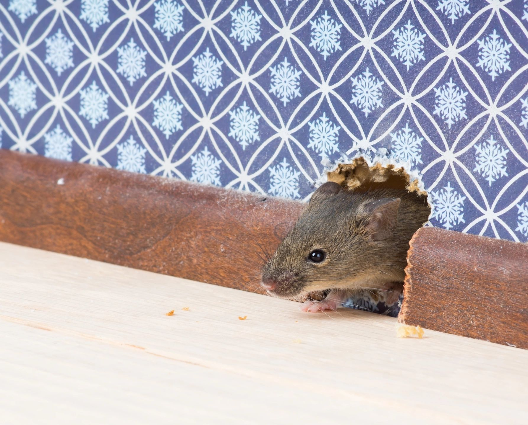 Buying a New Home? Look Out for These 3 Signs of a Pest Problem