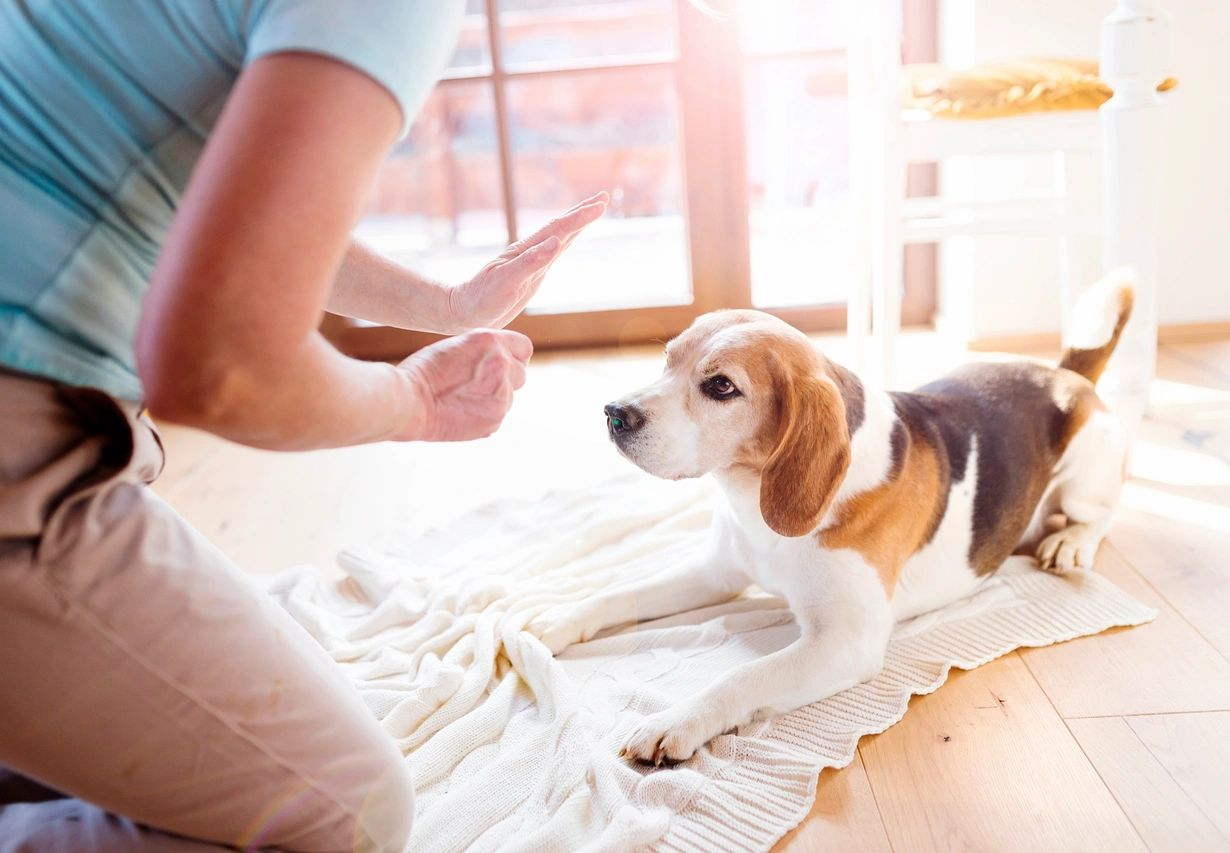 How to Prepare for Your New Dog