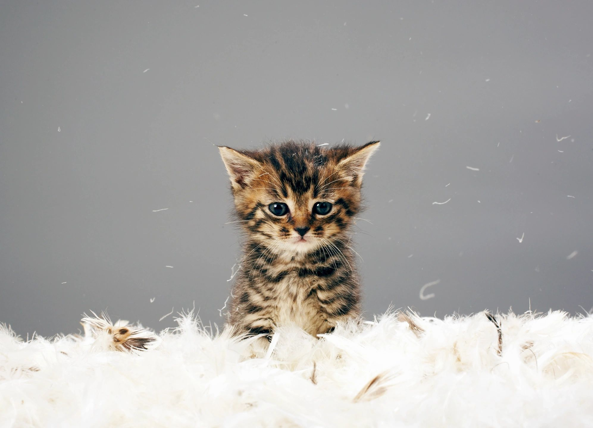 3 Key Things to Consider When Getting a Cat for Your Kids