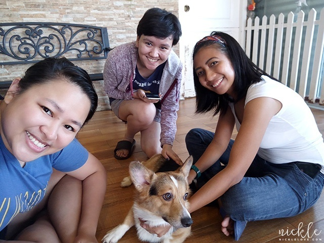 Haggard titas with Arrow the Corgi
