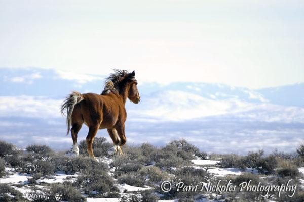 A stallion runs over the snowy ridge - Adobe Town, WY
