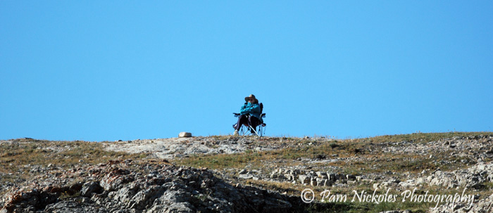 Enjoying the horses below the ridge - Pryor Mountains, MT