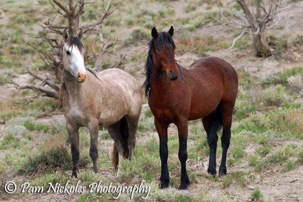 Bones with her stallion, Poco